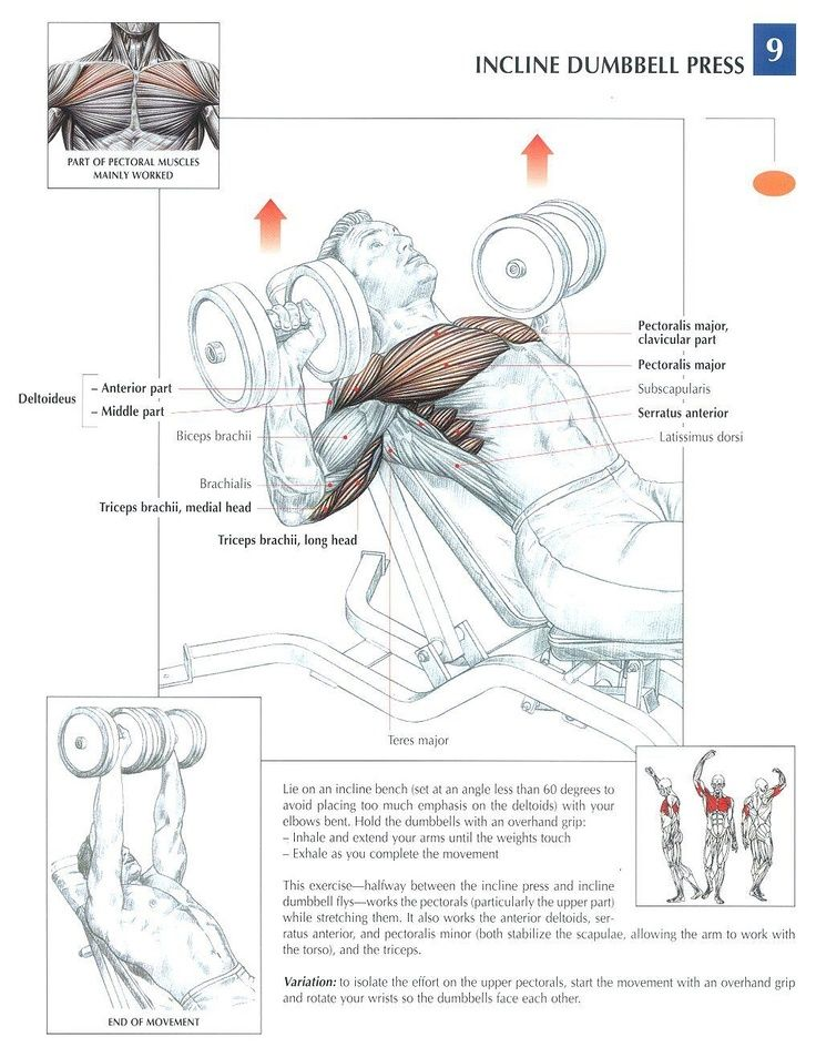 incline dumbbell press is a great exercise for working your chest