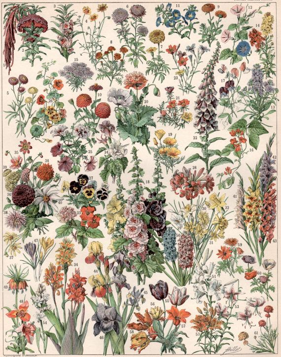 1897 Garden Flowers Antique Botanical Print Flower by Craftissimo