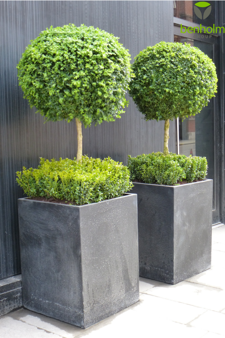 Luxury Hotel Dakota Glasgow Opted For These Planters To Welcome