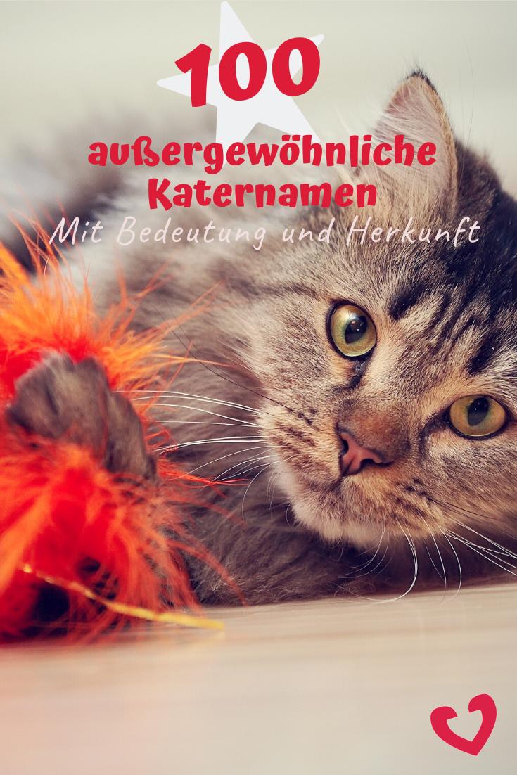 100 Ungewohnliche Katernamen Und Ihre Bedeutung In 2020 Katzen Namen Kater Katzennamen