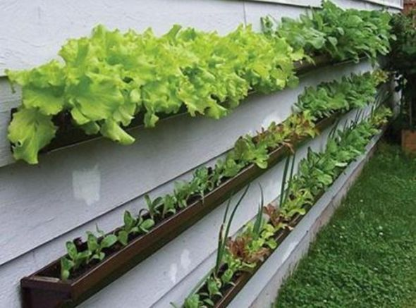 Gardening For Self-Reliance - Container Gardening Makes It Possible Part 1