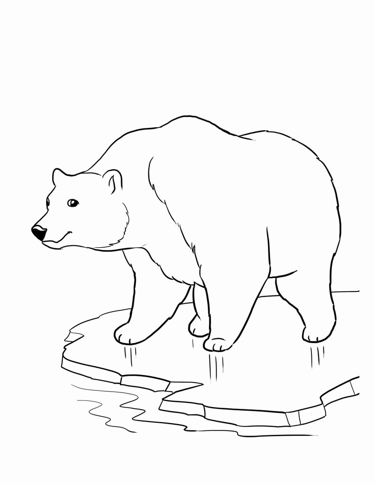 Polar Bear Eric Carle Coloring Pages in 2020 Polar bear