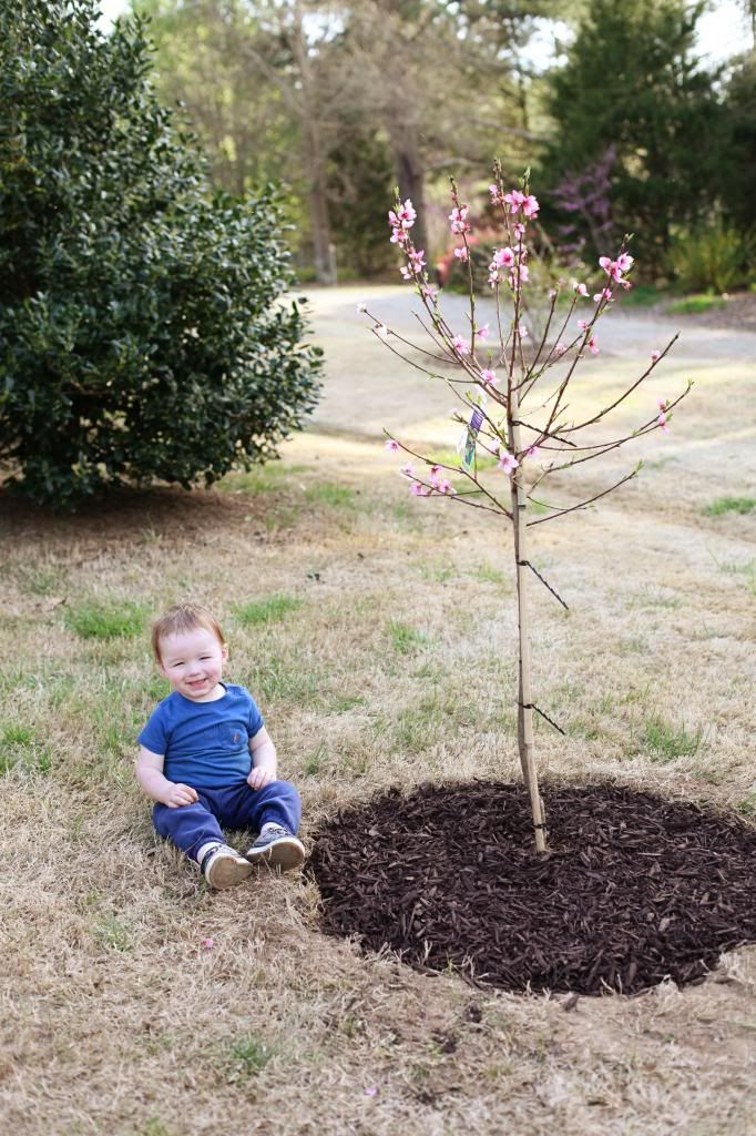 Plant a tree when your baby is young, and watch it grow as they do... #bucketlist - DONE! So excited! Take a new pic every year on mothers day :)