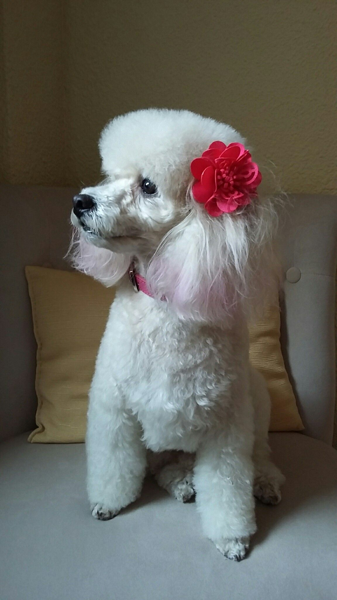 Leia Menina Portrait Cute Dog Pictures Baby Dogs