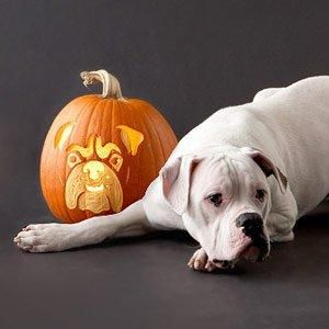 Awesome Jack O Lantern Dog Stencils Dog Pumpkin Dog Stencil