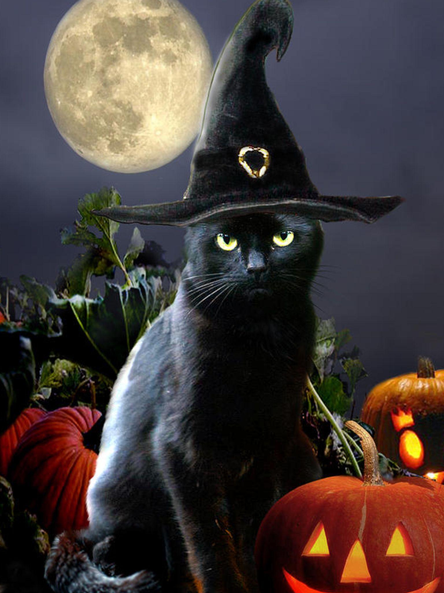 Halloween, All Hallows Eve, Trick or Treat, Black Cat, Bat ...