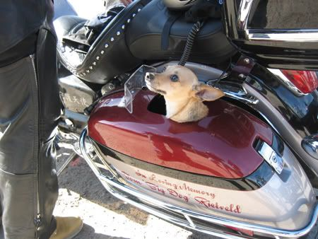 c8424b15e39 PET CARRIER??? | Motorcycle Pet Carriers | Pet carriers, Hiking dogs ...
