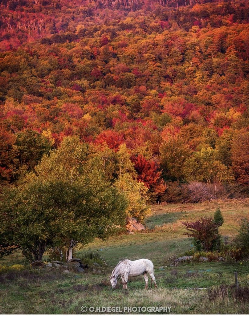 Pin By Susan Miller On Vermont Vermont Natural Landmarks Fall Colors