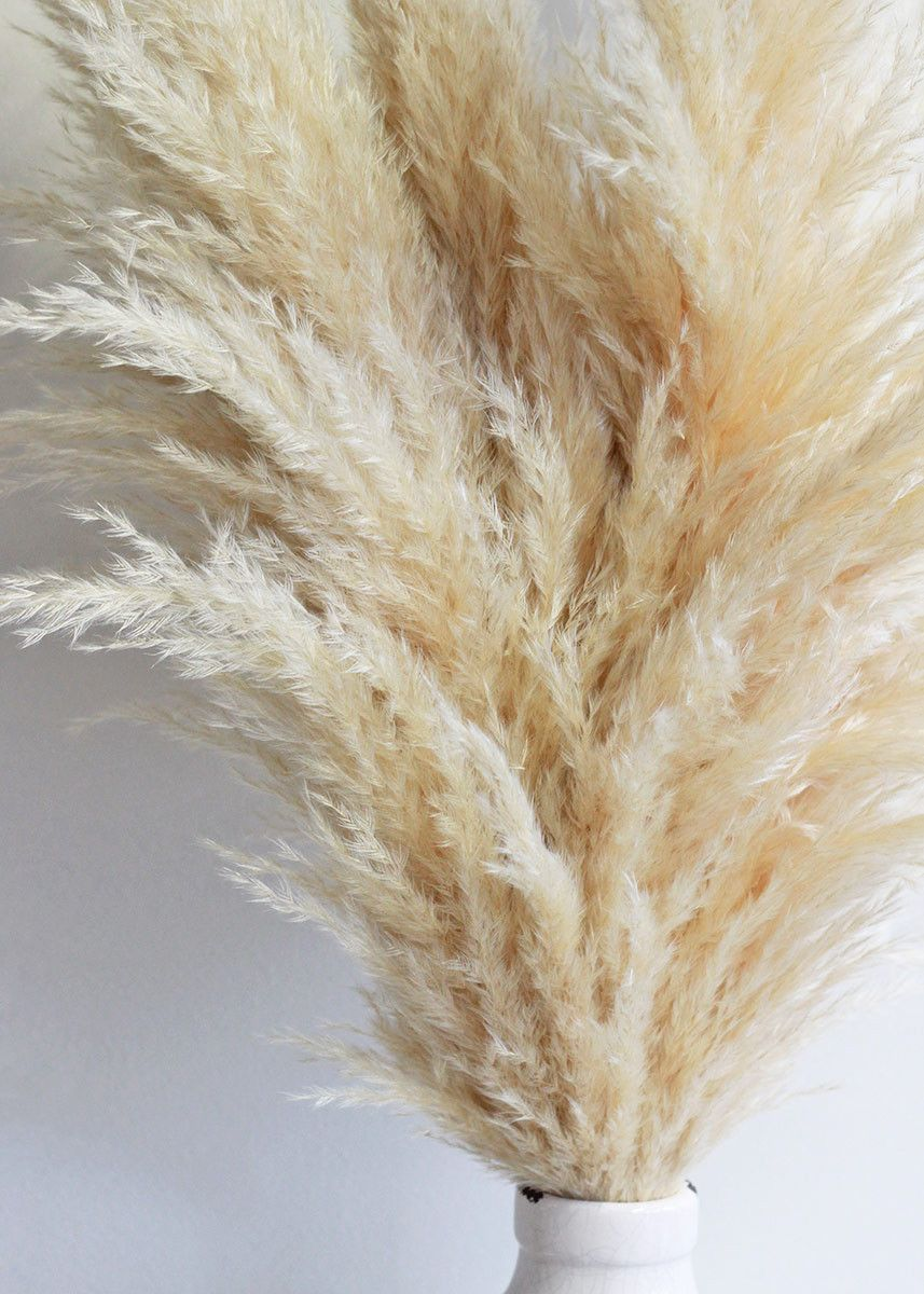 Dried Pampas Grass In Natural Color 6 Stems Bunch 30