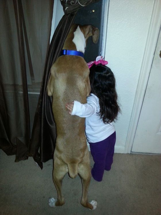 25 of the most adorable photos of dogs and their little humans on the Internet » DogHeirs | Where Dogs Are Family « Keywords: babies, Friends for Life, dogs are family