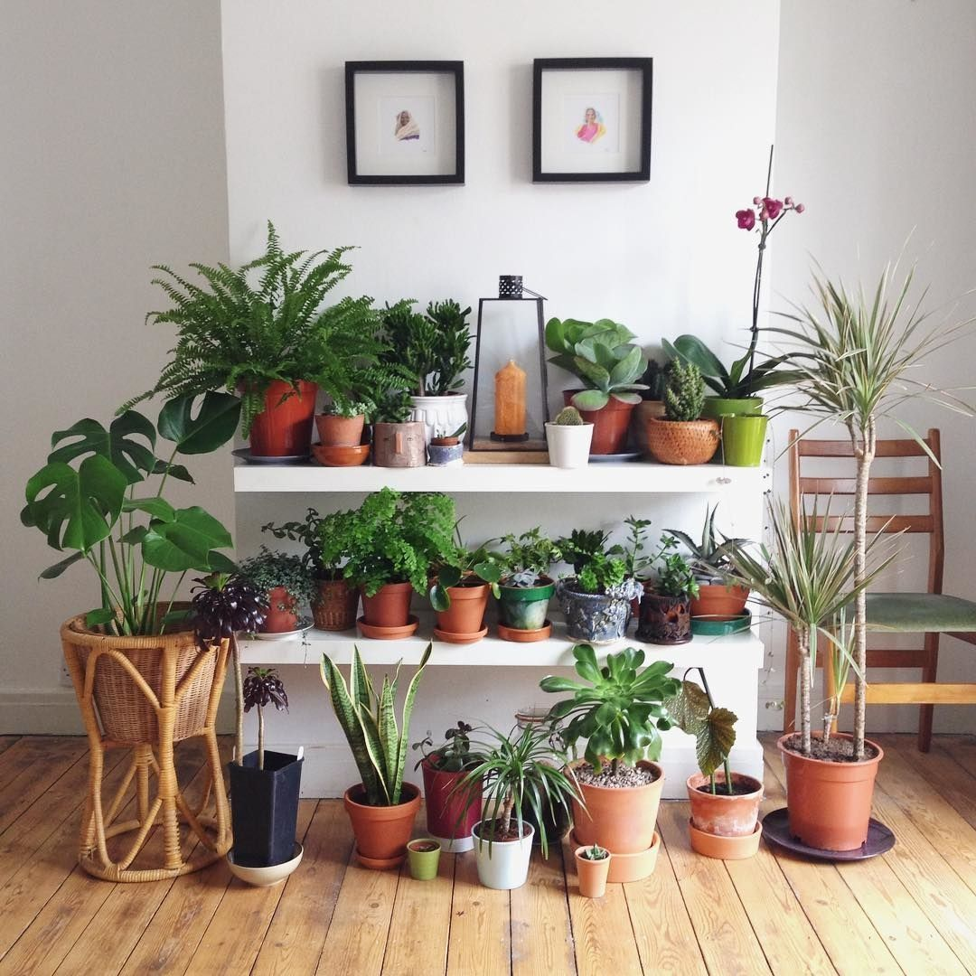 Urban Jungle Bloggers Urbanjungleblog Instagram Photos And Videos Plant Decor Indoor Plants Interior Plants