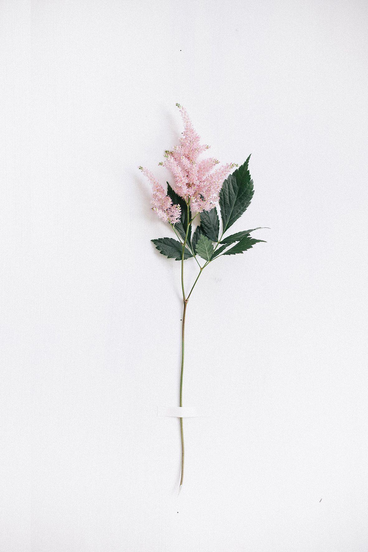 Astilbe Flowers Photography Flower Wallpaper Flower Aesthetic