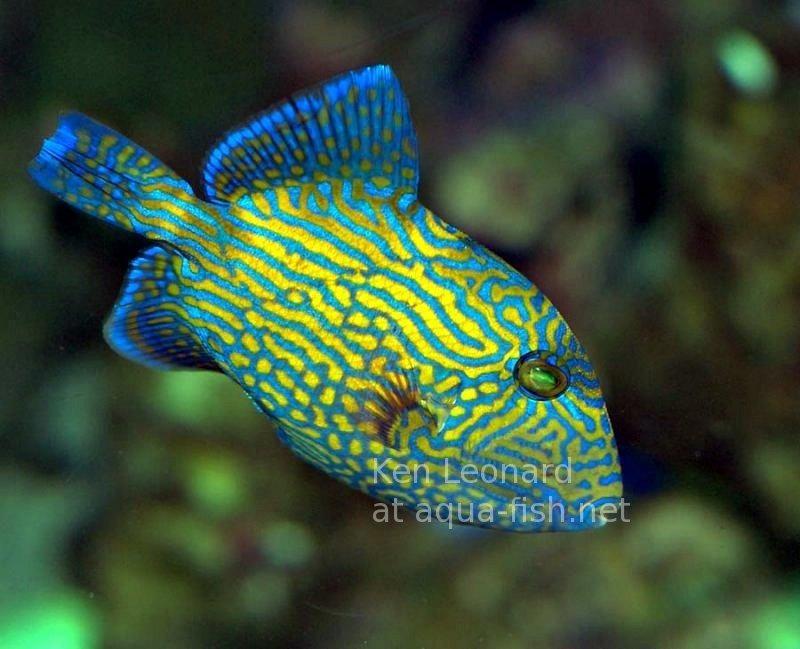 Pin Von Fanta Sea Auf Here Fishy Fishy