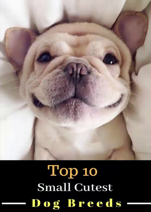 The Top 10 Cutest Puppy With Best Puppy Eyes In The World For 2020