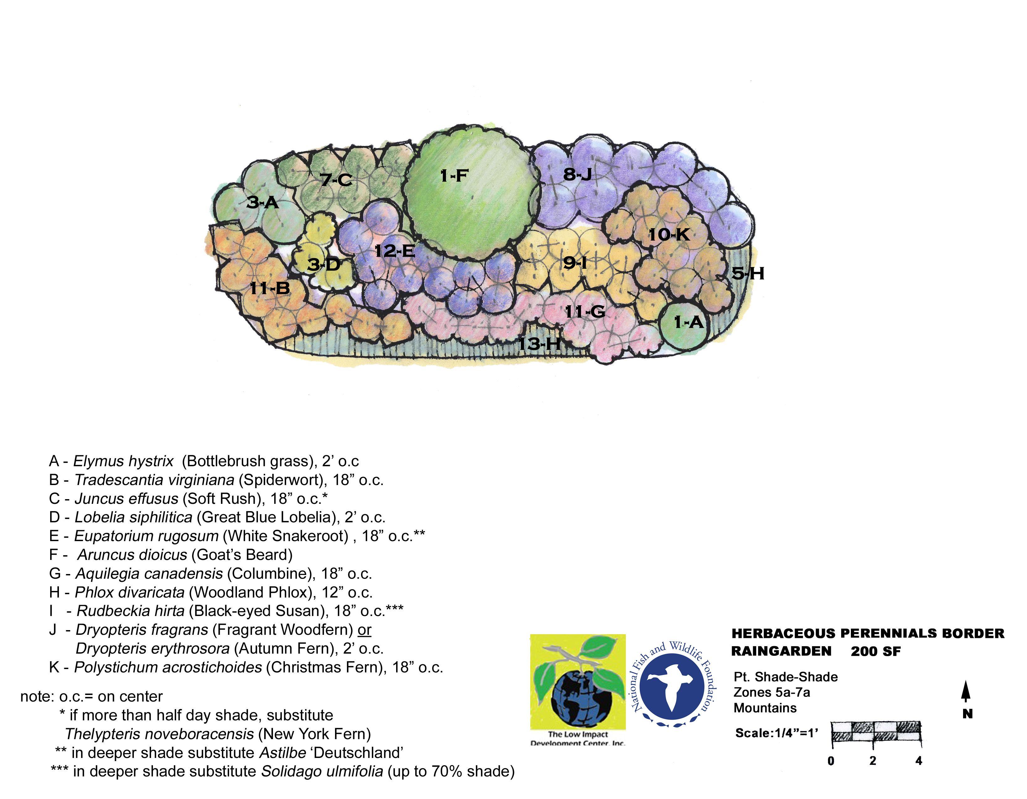 http://www.lowimpactdevelopment.org/raingarden_design/Templates4RainGardens/Templates4ShadeMountain/HerbacPerenn200SFQScaleMtnShade.jpg