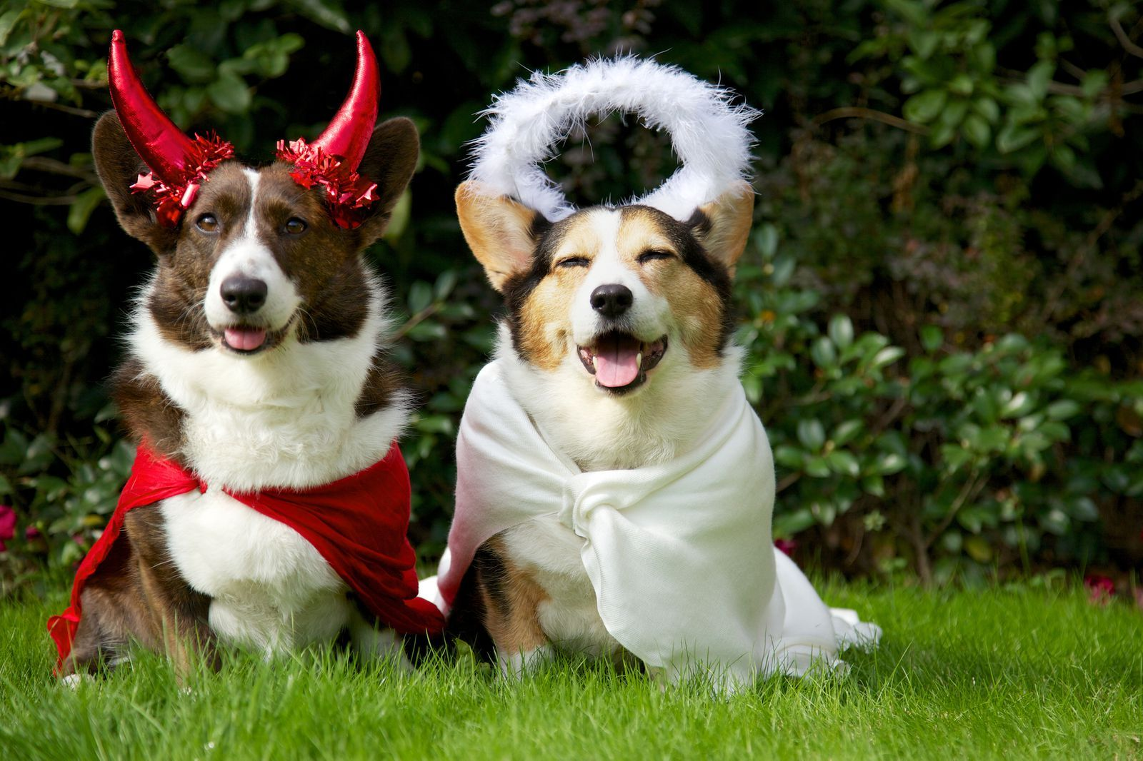 14 Insanely Adorable Halloween Costume Ideas For Your Dog Dog