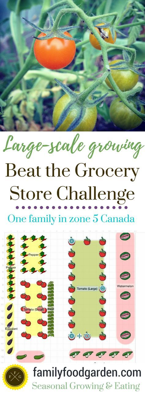 beating the grocery store with home food production