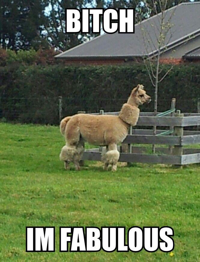 Llama Couture Alpaca Funny Cute Alpaca Funny Llama