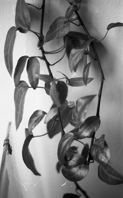 Silver leaves - by Sunniva Helene