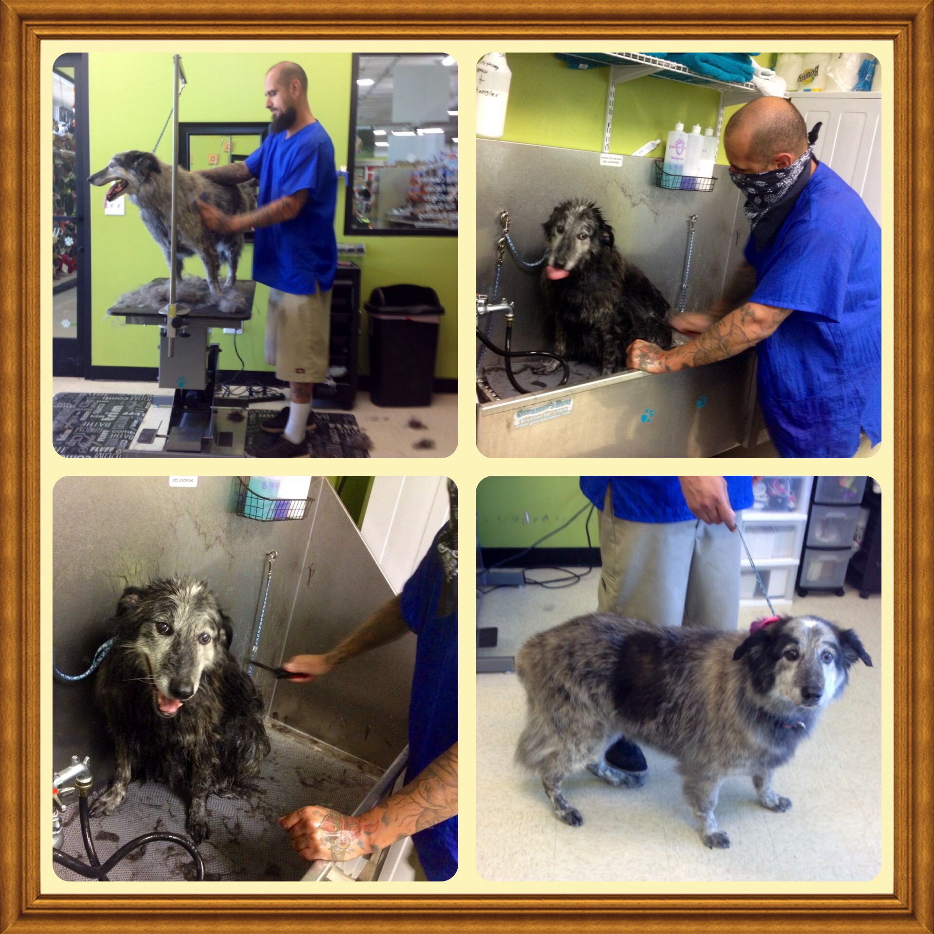 The Pet Club Grooming Salon 17204 n 67th ave, Glendale