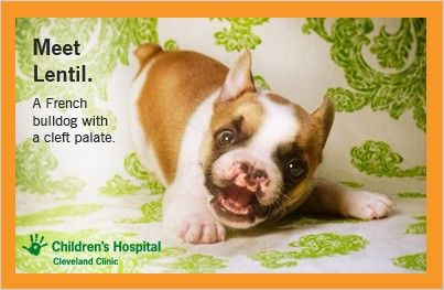 Puppy With Cleft Palate Teaches Kids Tolerance Slideshow