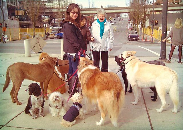 Dog Walker and dogs.  http://dennissylvesterhurd.blogspot.com/2012/02/leashes-and-labour.html