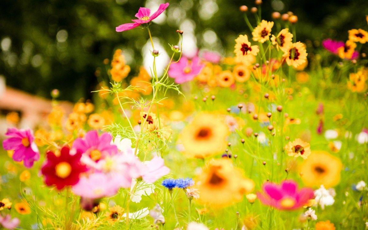 Wild Flowers Amazing Nature Summer Wallpaper3d