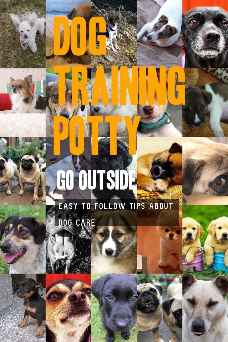 Have The Know How Of Dog Training Potty Go Outside Check Out This Great Article In 2020 Dog Potty Training Dog Training Basic Dog Training