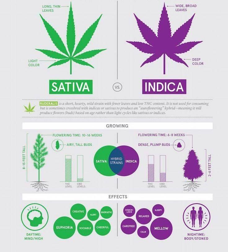 Sativa Vs Indica #marijuana #marijuanainfographic Http