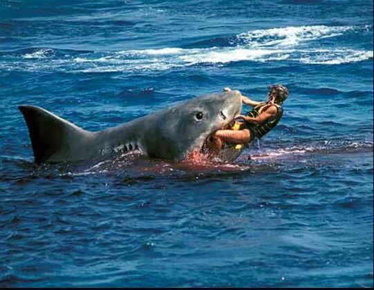 Worst Florida Beaches Sharks