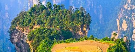 Mountaintop Rice Field In Zhangjiajie National Forest Park
