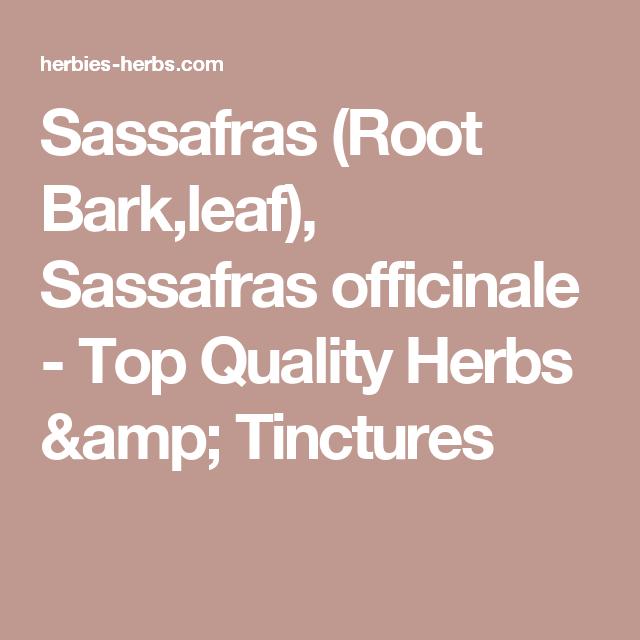 Sassafras (Root Bark,leaf), Sassafras officinale - Top Quality Herbs & Tinctures