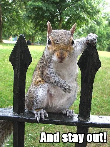 And stay out! | Cute animals, Squirrel pictures, Scary animals