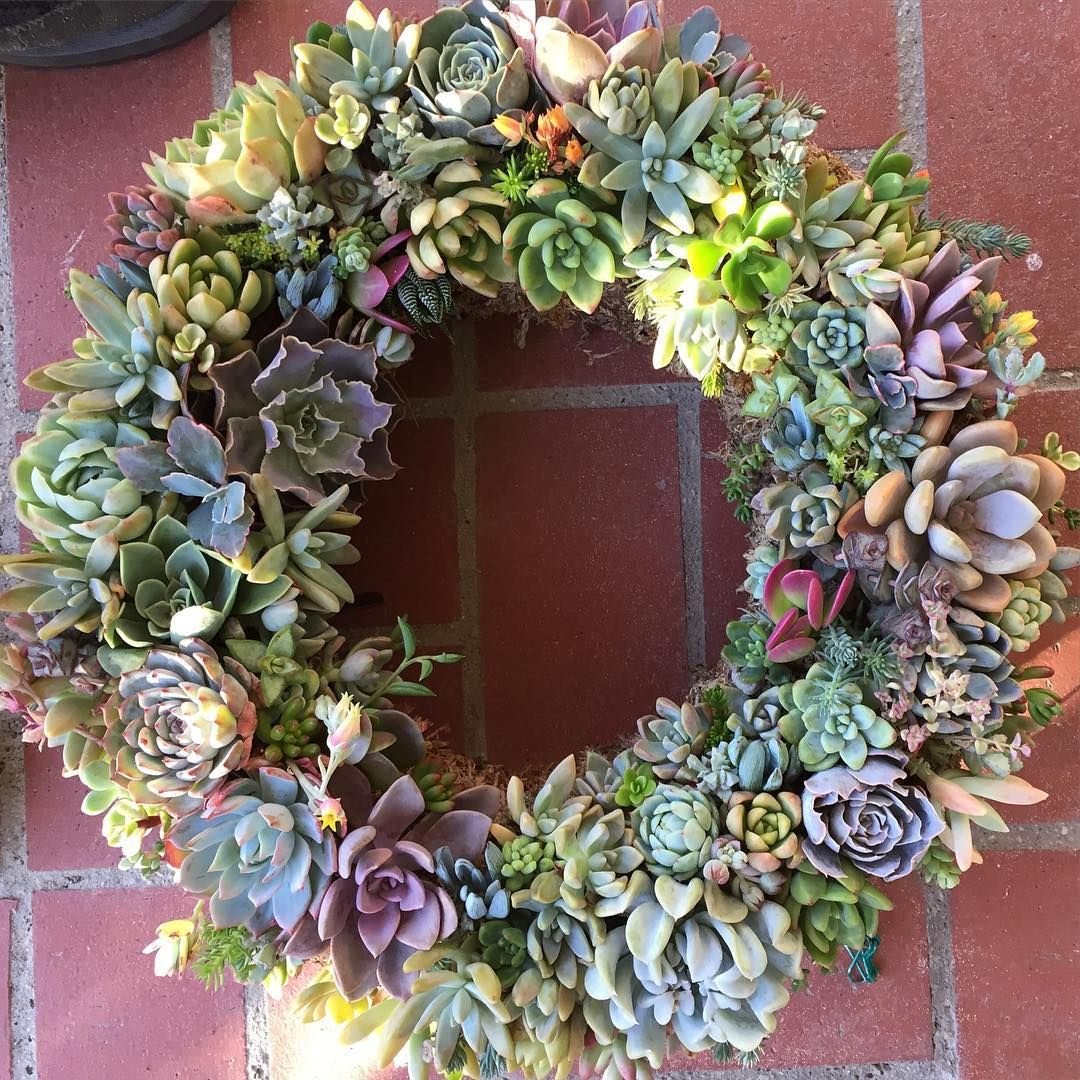 """My Spring succulent wreath is all rooted and looking great after two months. We are making these 13"""" rounds on Saturday, April 2nd at the @vintagebegonia in beautiful Downtown Temecula. There are just a few spots remaining, so if you'd like to come email Megan at info@sharesucculents.com. I'll get in touch with you tomorrow to confirm the details. #sharemywreath"""