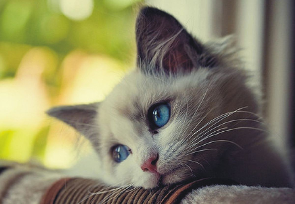 Image result for images of unhappy cat
