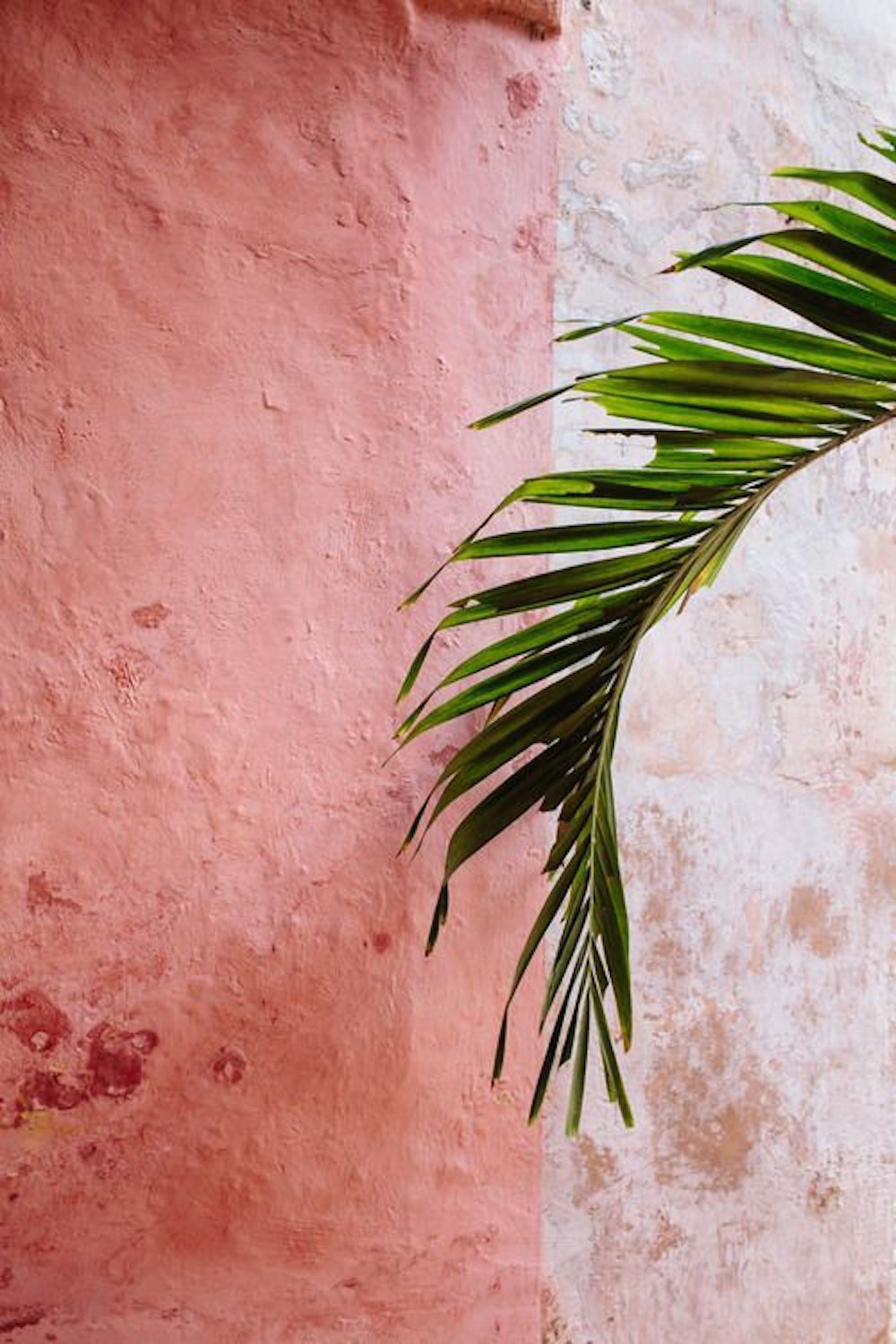 entracing palm tree type house plant. pink  blush photography art inspiration fashion runway editorial models tumblr purienne vogue magazine