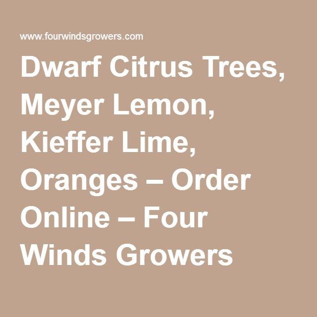 Dwarf Citrus Trees, Meyer Lemon, Kieffer Lime, Oranges U2013 Order Online U2013 Four