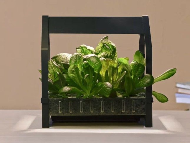 Ikea Is Introducing Countertop Hydroponic Planters For 400 x 300