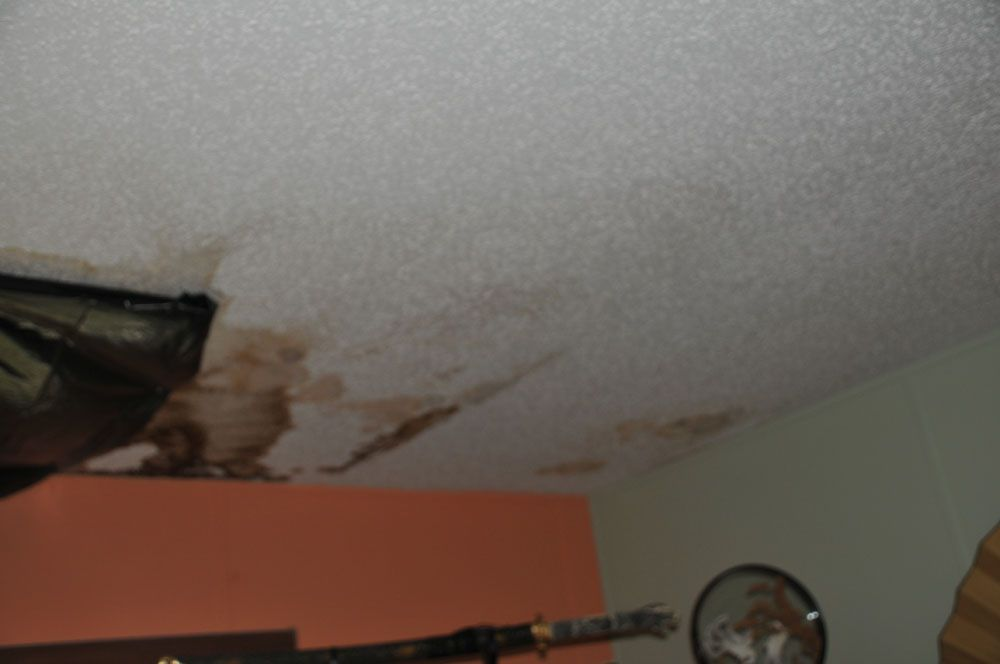1st step public adjusters are specialized in mold damage