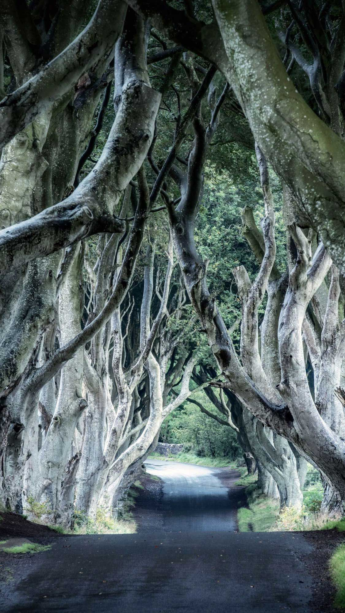 Dark hedges northern ireland wallpaper Iphone Wallpapers