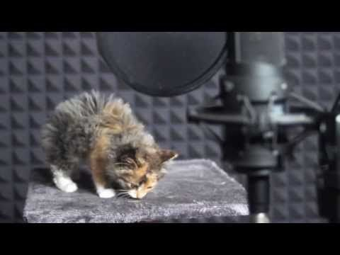 This made my kitty loving heart ache. Cats sing - YouTube