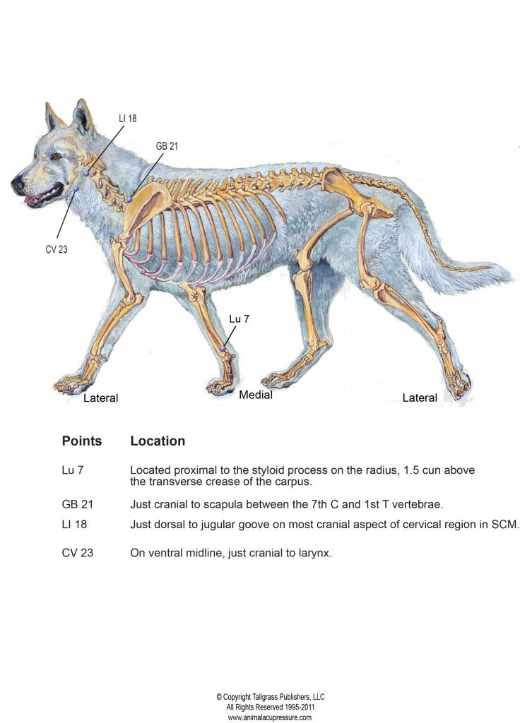 Acupressure Benefits Laryngeal Paralysis | Animal Health & Care ...