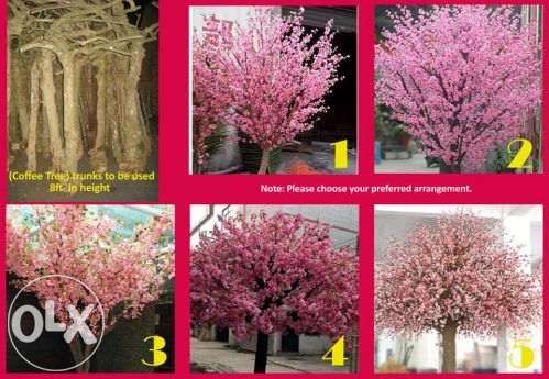Cherry Blossom Tree Cherry Blossoms For Rent Cherry Blossom Tree Tree Trunks Coffee Tree