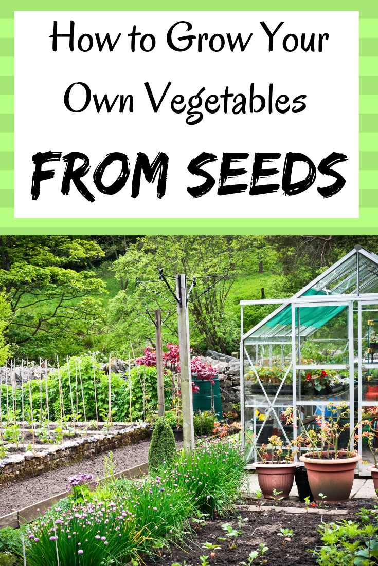 Start Your Seeds Right Diy Guide For Growing From Seeds Plants Growing Flowers Growing Vegetables