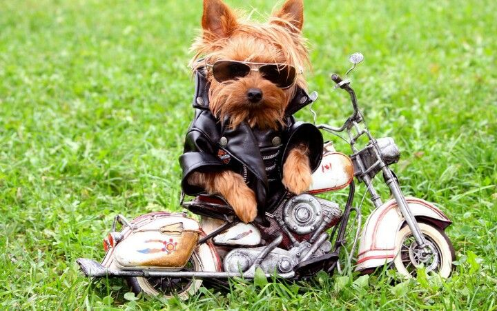 Harley Doggyson
