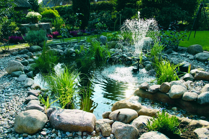 There are plenty of reasons to install a fish pond at home for Plenty of fish search by interest