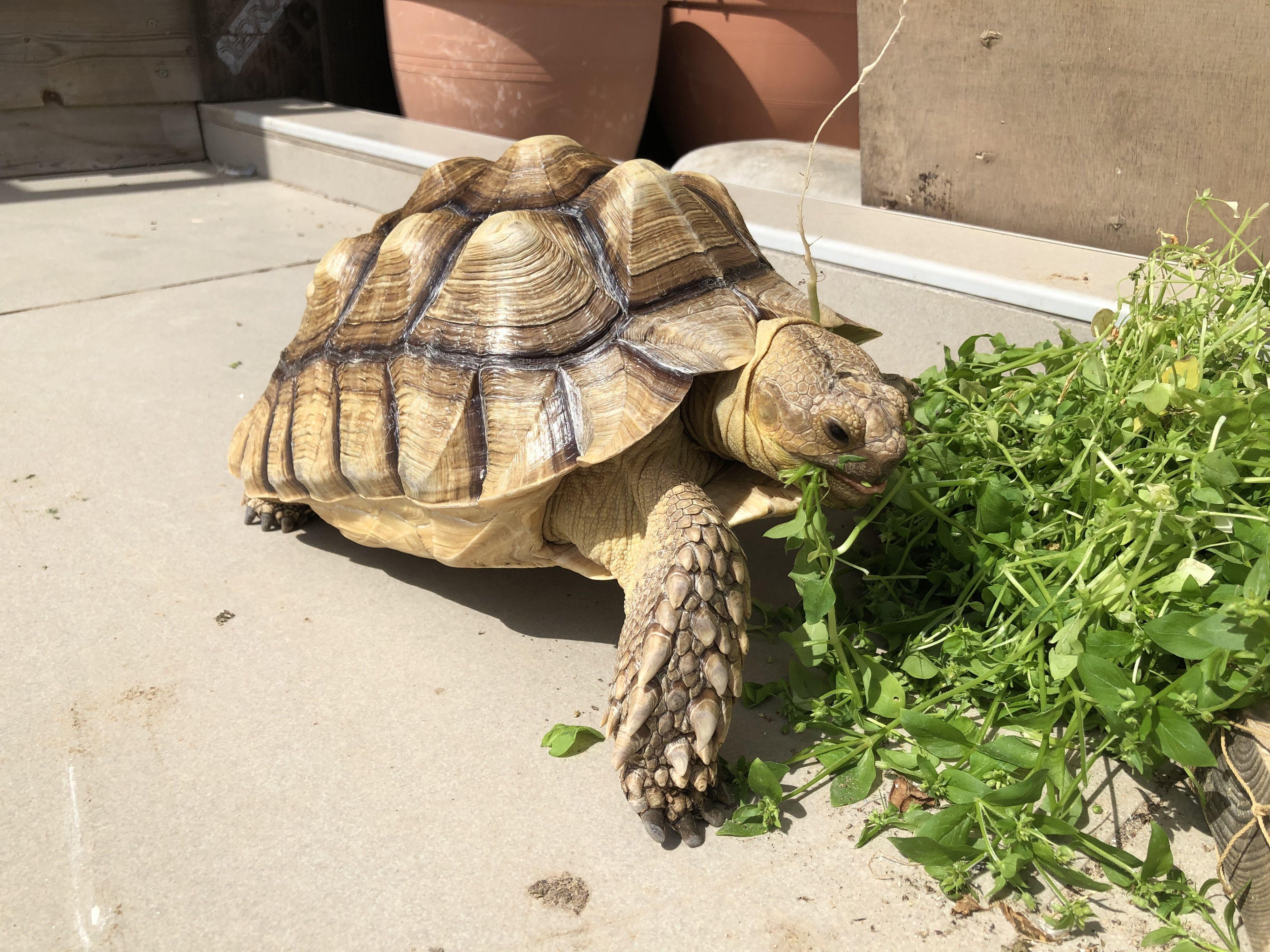 Pin By ひろ On Cherepahi Turtle Tortoise Animals