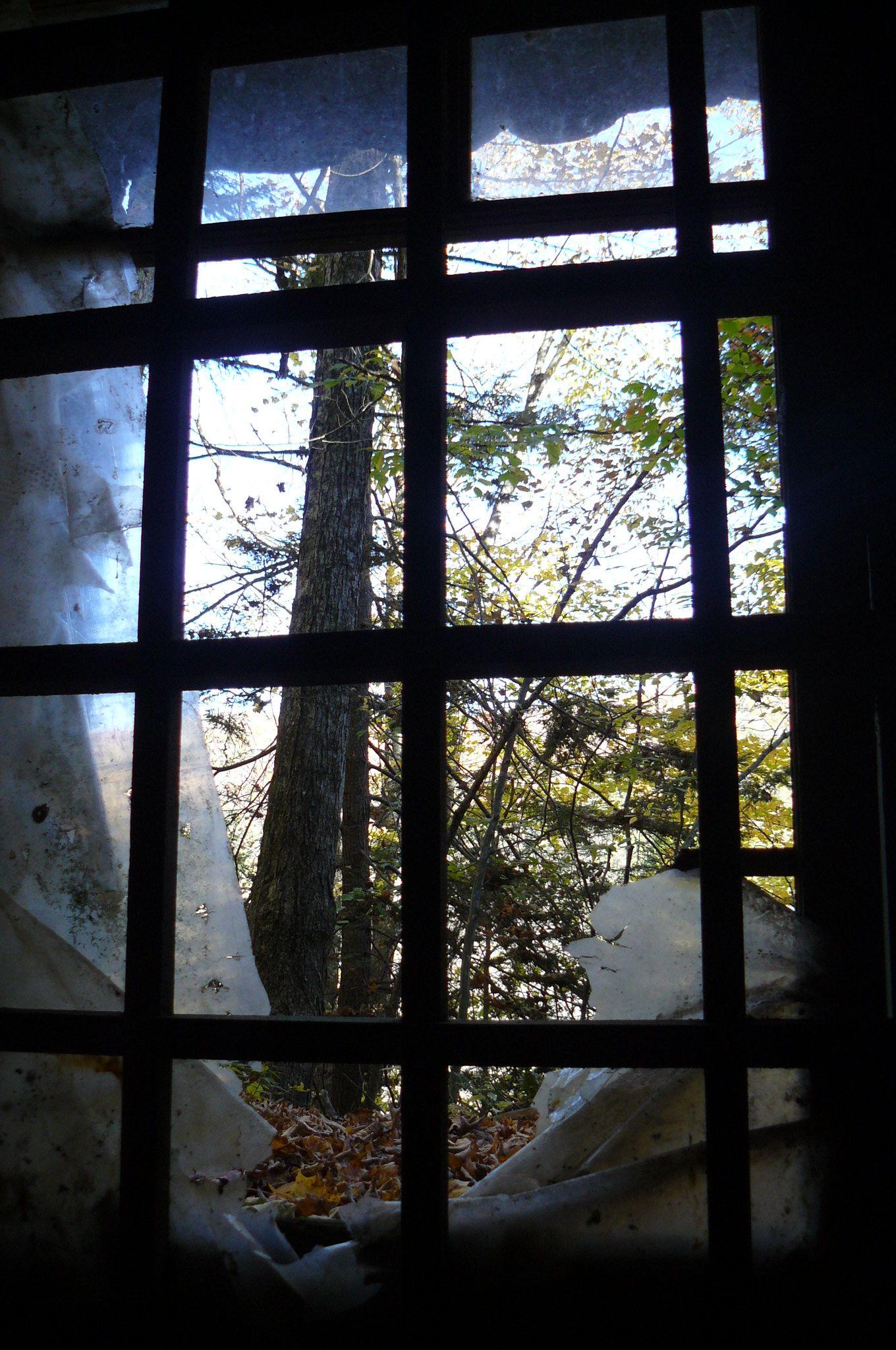 a look out thru a basement window