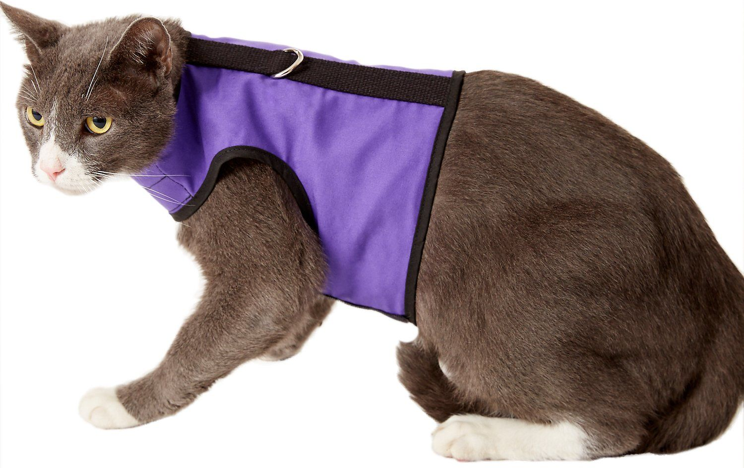 Https Www Chewy Com Kitty Holster Cat Harness Purple Dp 134273 Utm Source Google Product Utm Medium Cpc Utm Campaign Hg U Cat Harness Cats Cat With Blue Eyes