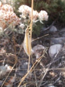 Lacewing in focus